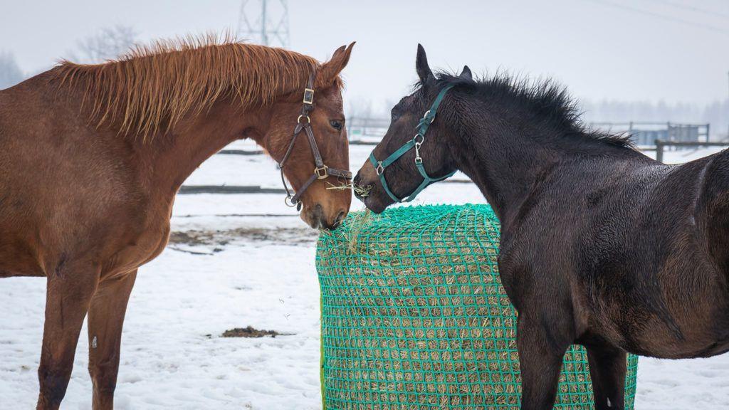 Bezpieczenstwo Uzywania Siatek Na Siano Piece Of Hay Siatki Na Siano Horses Animals