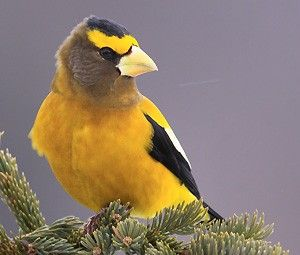 The Great Backyard Bird Count We invite you to participate ...