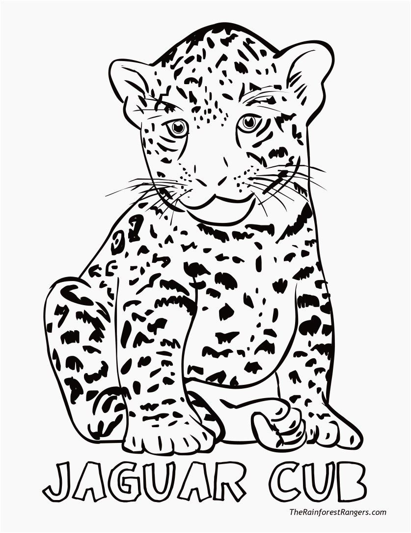 - Coloring Sheets Jungle Animals Fresh Coloring Pages Jungle Animals