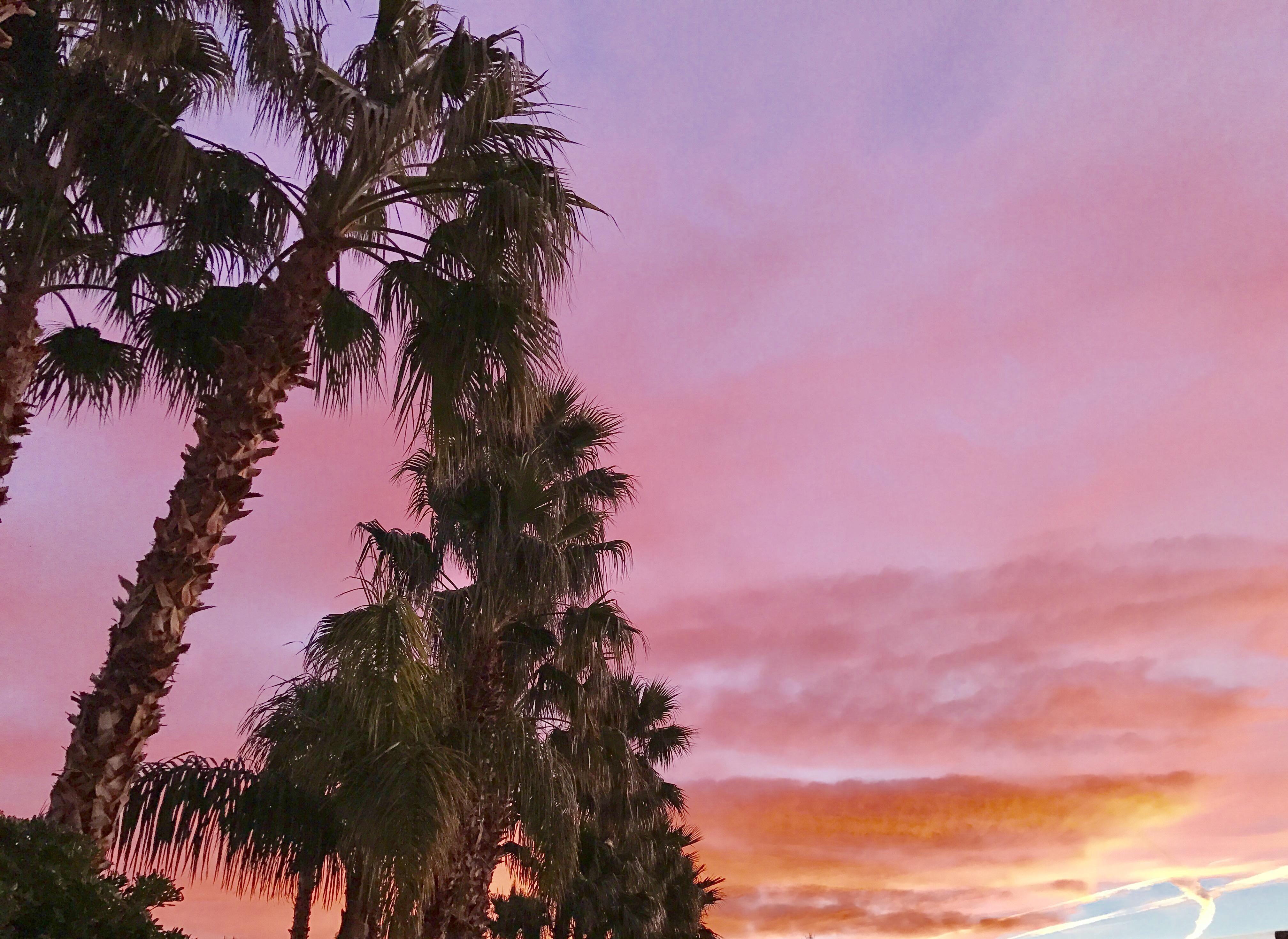Backyard Palm Trees Las Vegas NV [4032x2939] [OC]