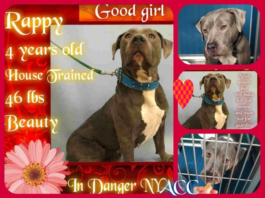11++ New york safe haven animal rescue images
