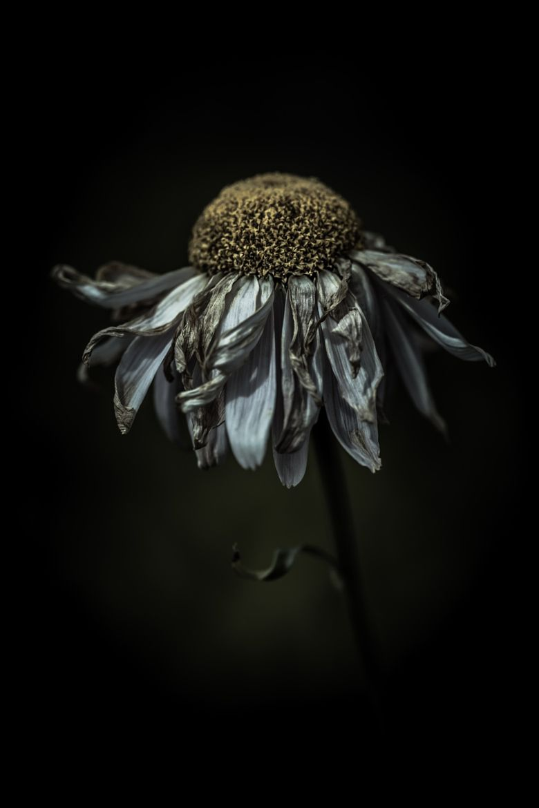 Photograph feeling frazzled in a delighted way by alan shapiro on