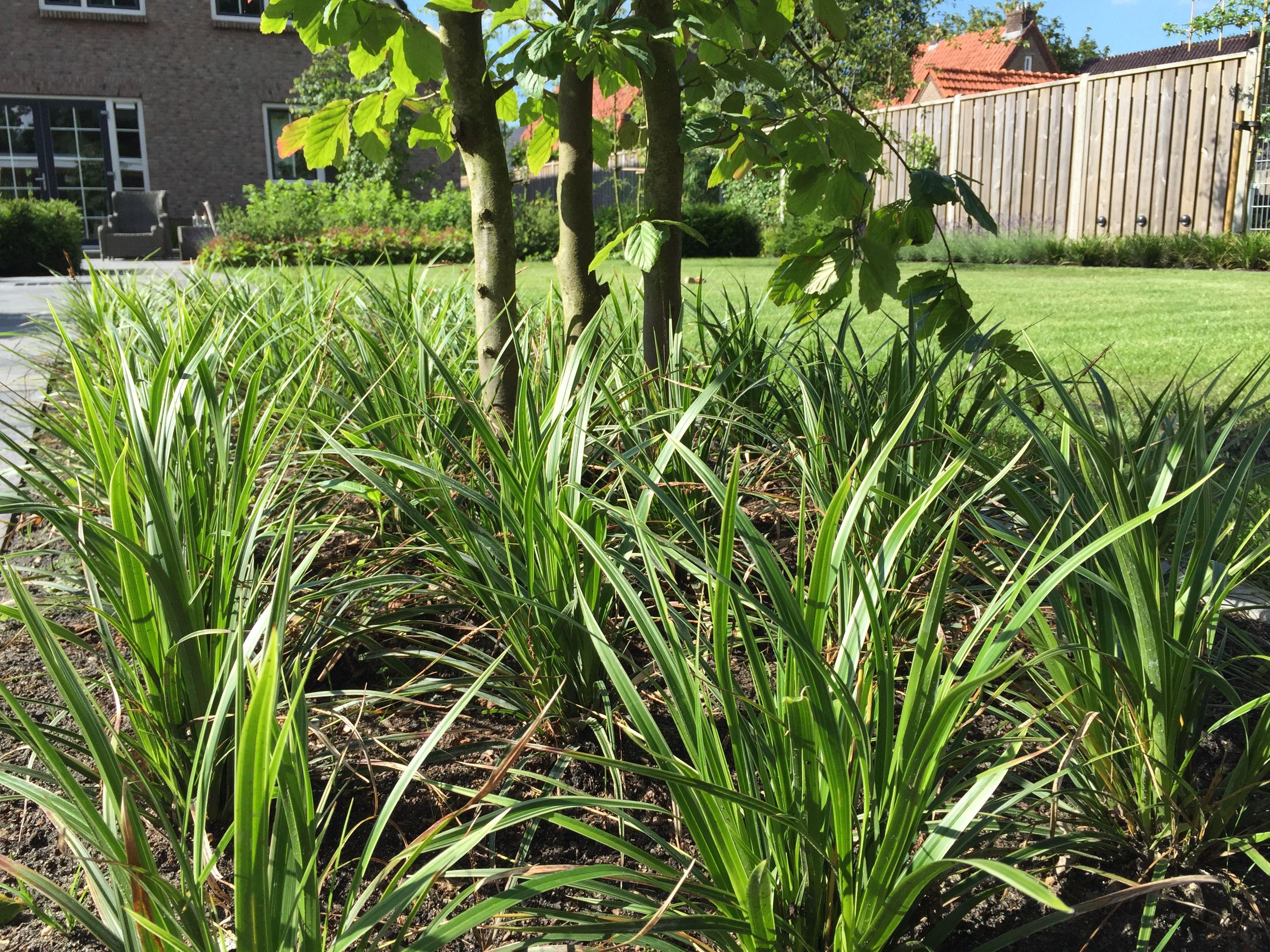 Zo Kies Je Een Boom Voor De Kleine Tuin (Tips