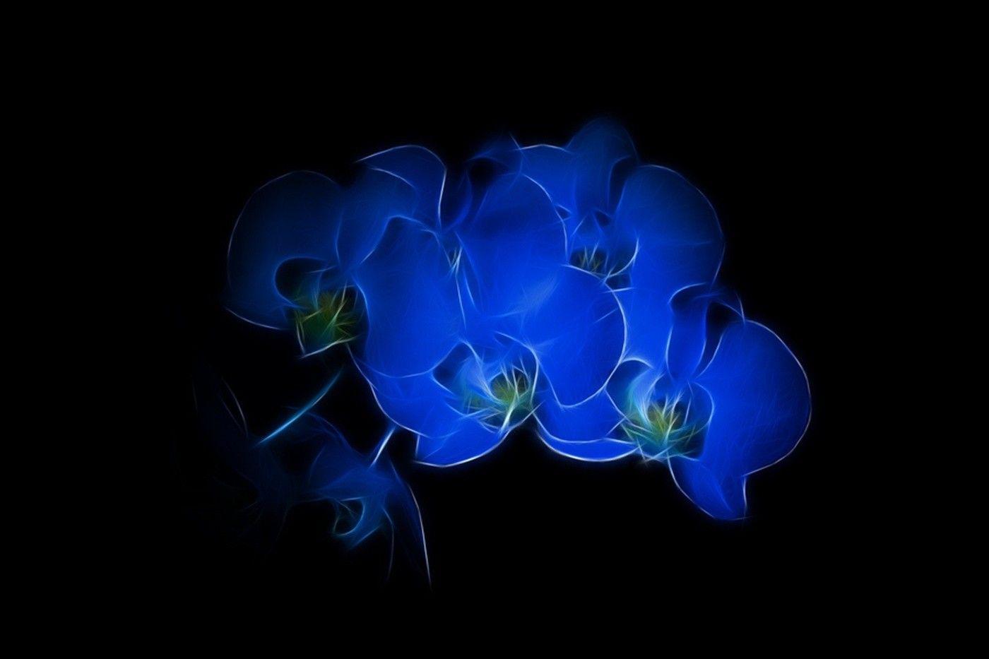 Fractalius, Black Background, Flowers, Blue Flowers