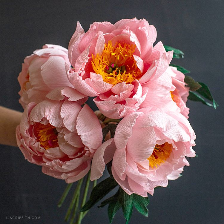 Member Make February: Crepe Paper Coral Supreme Peony #paperflowers