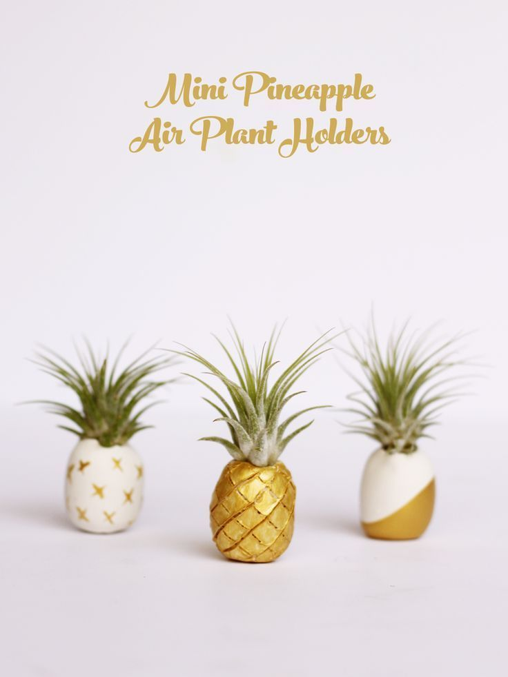 Diy crafts ideas mini pineapple air plant holders kids for Air plant holder ideas