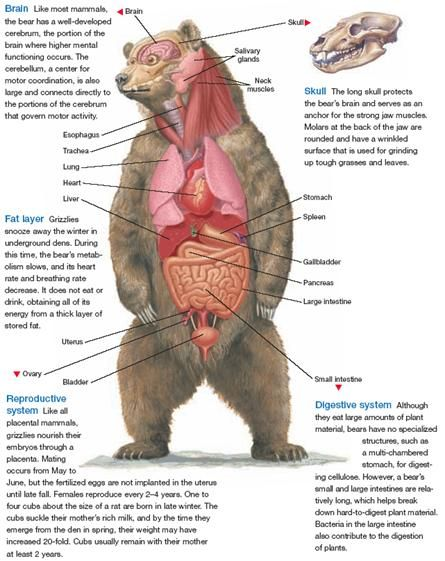 Biology Diva / Zoology Chapter 36 | animals anatomi | Pinterest ...