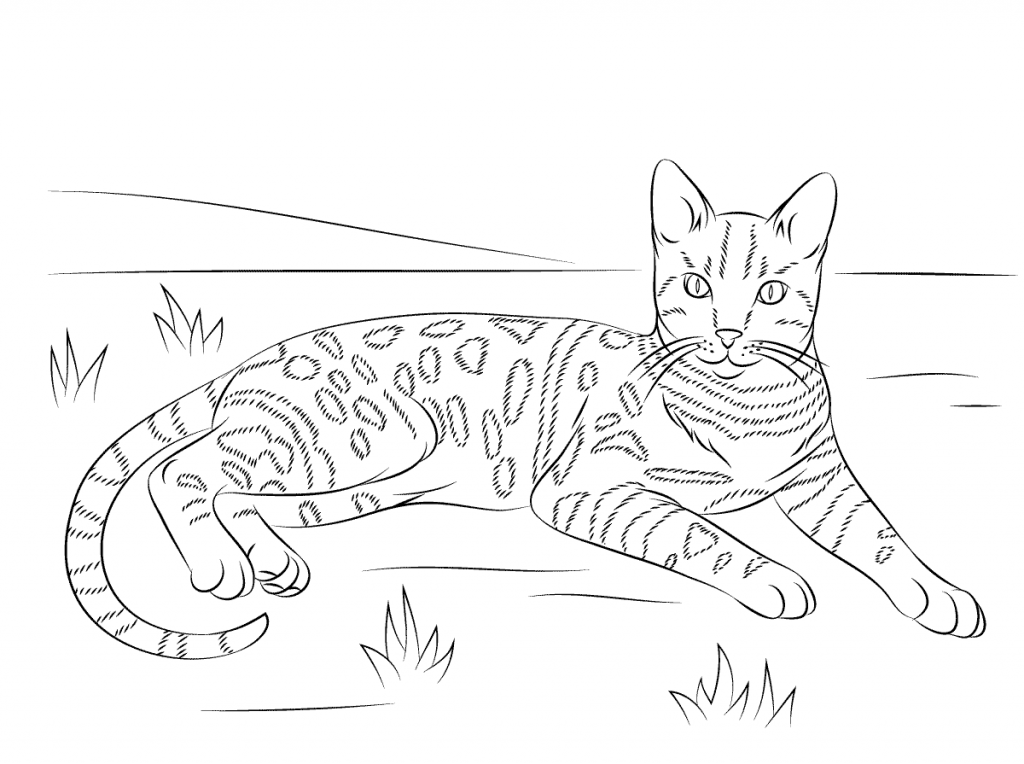 Cat Coloring Pages For Adults Best Coloring Pages For Kids Cat Coloring Page Coloring Pages Animal Coloring Pages