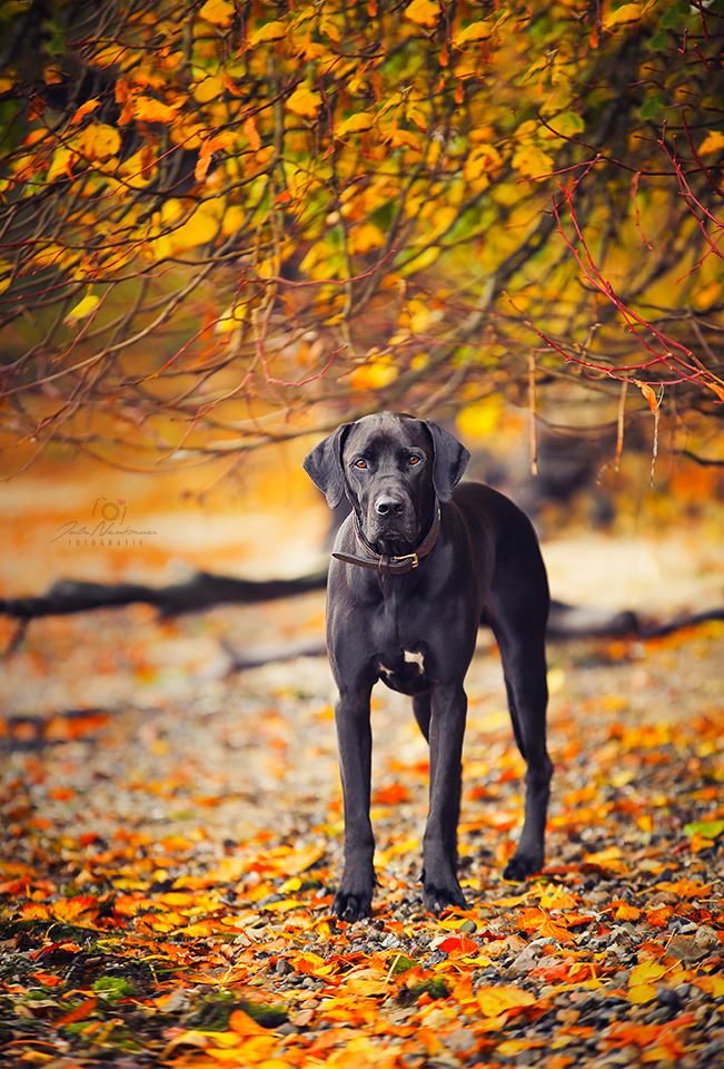 Pan Ein Rido Rhodesian Ridgeback Deutsche Dooge Mix Hunde Tiere Hund Coole Hunde