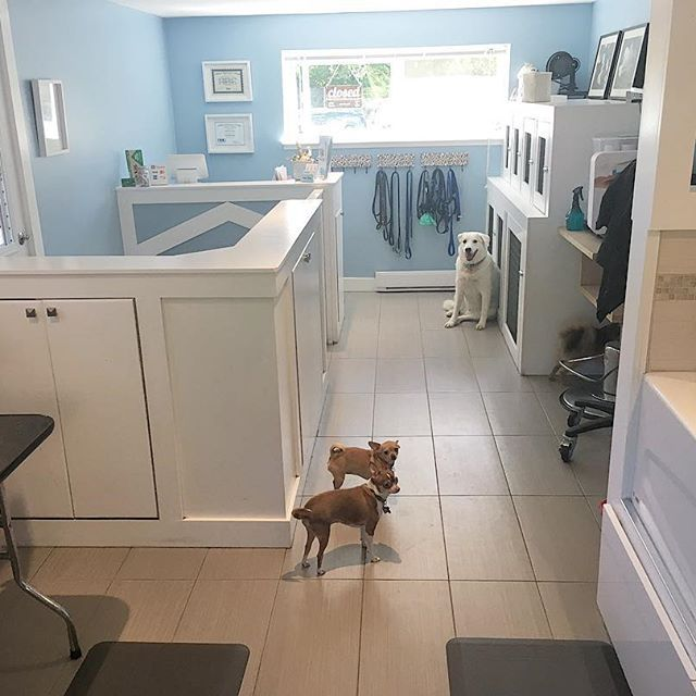 Bark Bath Self Serve Dog Wash Dog Grooming Dog Grooming Salons