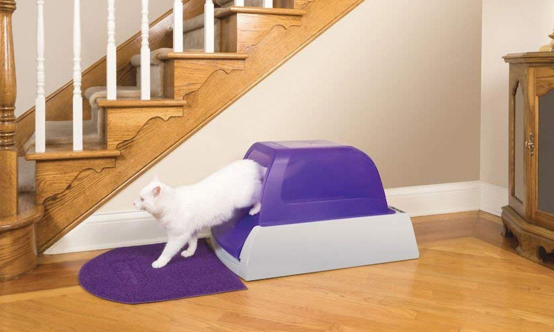 5 great litter boxes that actually keep odors under