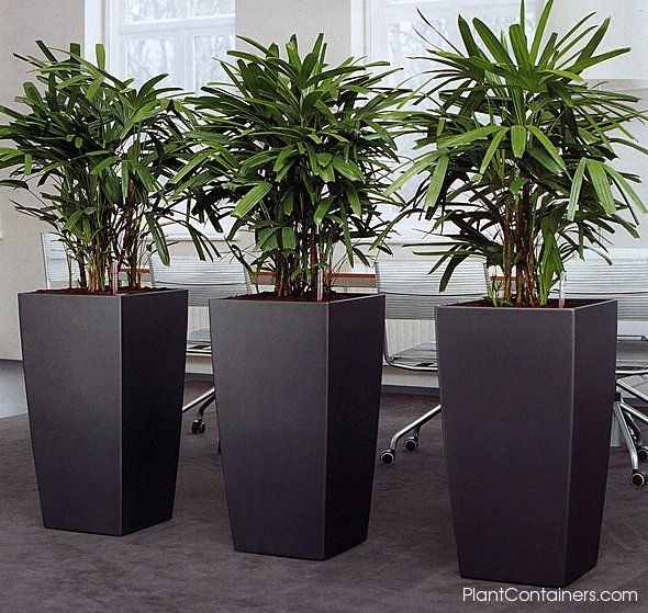 Horizon tall vases lobby ideas pinterest tall vases planters and plants - Tall plants for indoors ...
