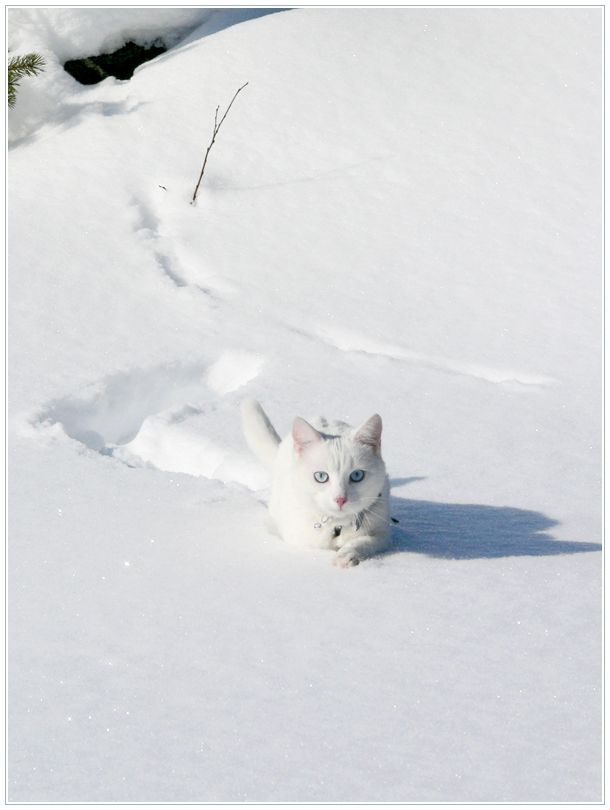 Swimming Through Snow by ~ace-of-finland on deviantART