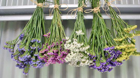 Pflanzen Trocknen wenn blumen richtig trocknet halten sie für die ewigkeit wir