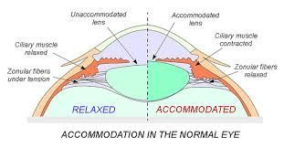result for accommodation in the eye