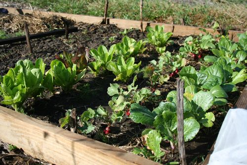 How to Plan Ahead for Your Fall Garden