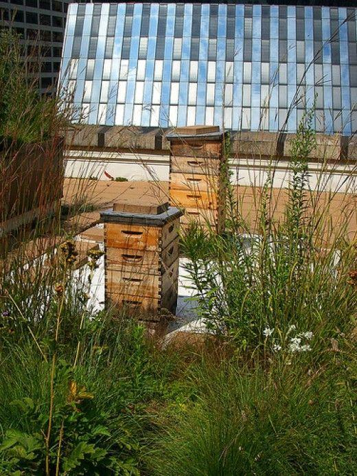 Urban Beekeeping For Beginners   Beekeeping for beginners ...