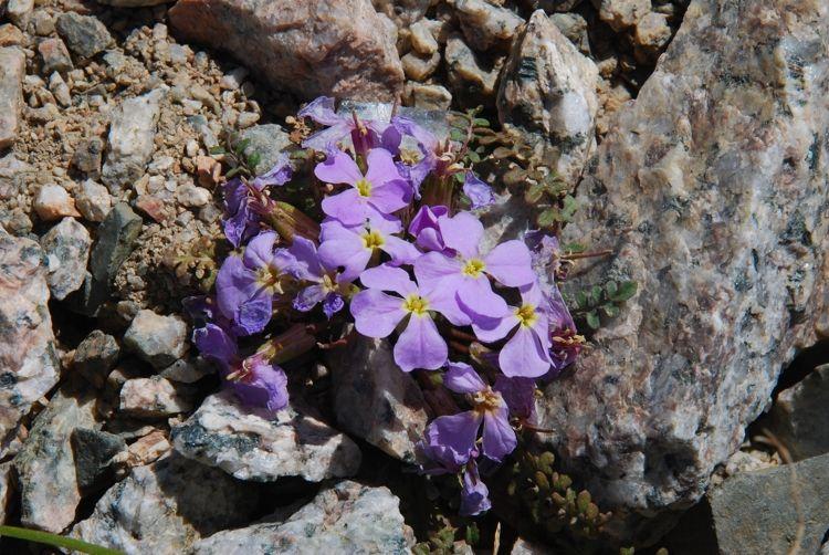Tian Shan, Central Asia, Flora