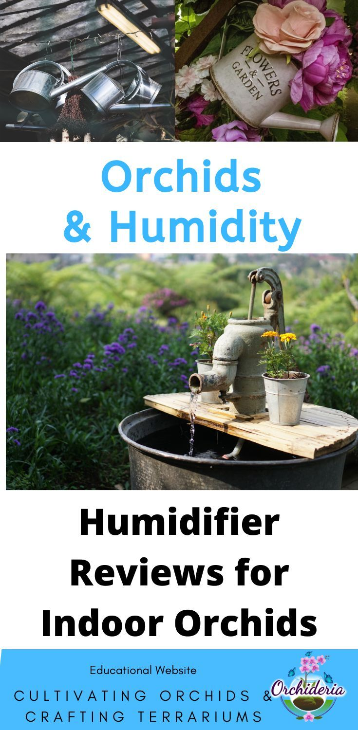 Best Humidifiers for Orchids in 2020 Indoor orchids