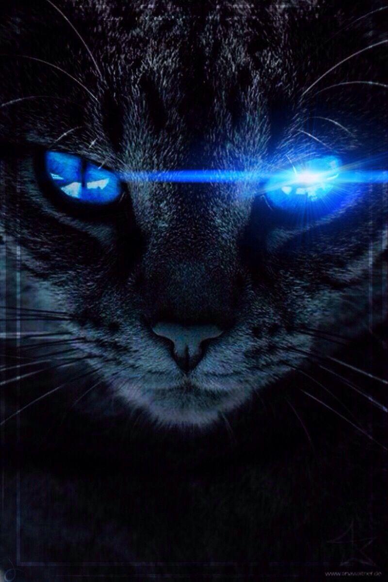 Black Cat Blue Eyes Cat Blackcat Blue Blueeyes Catbackground Freetoedit Remixit Black Cat Pictures Cat Background Cat With Blue Eyes