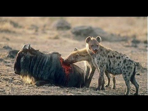 filmmaking documentary,CRAZIEST Animal Fights, Most Amazing Wild Animal ...