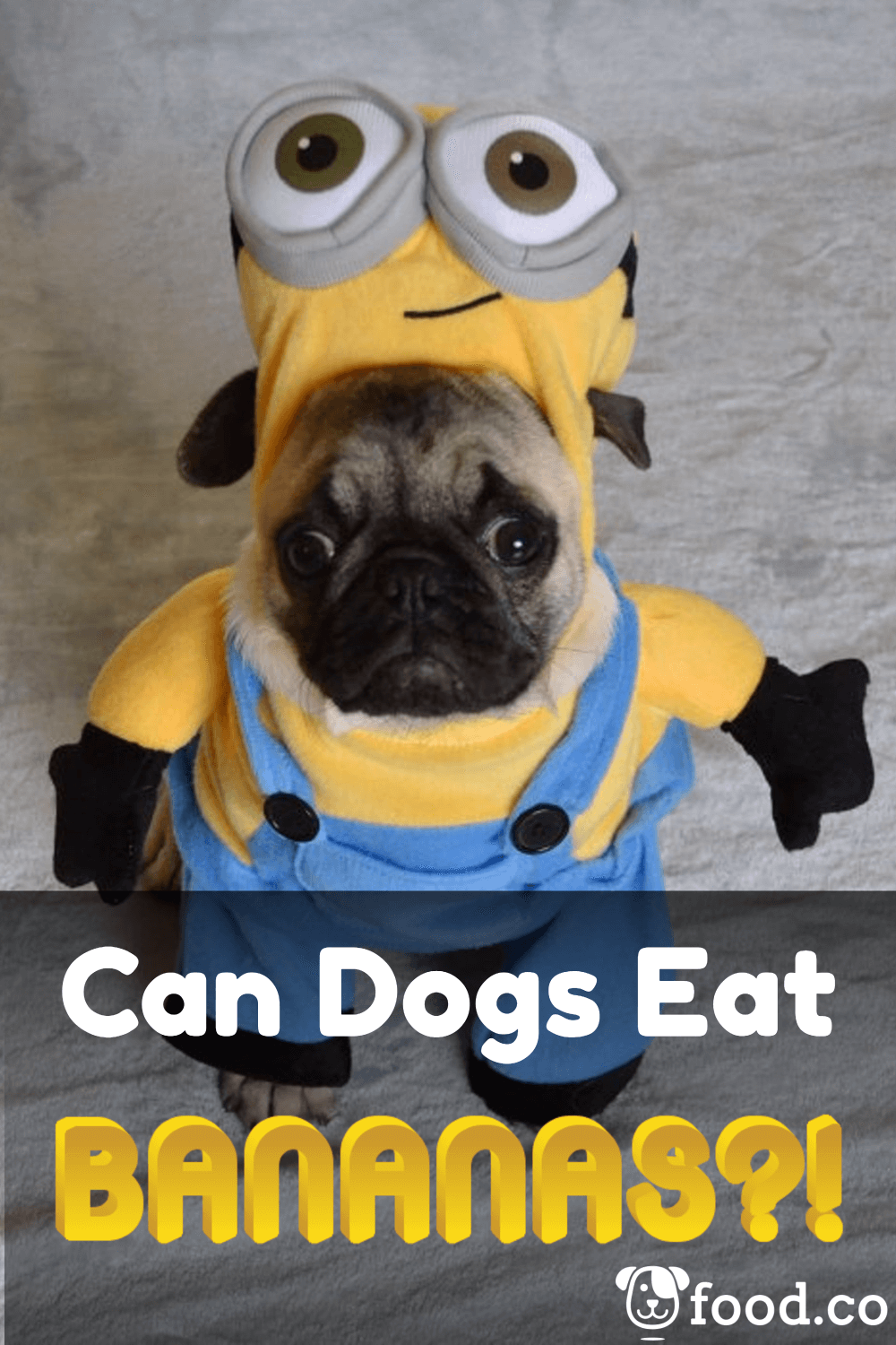 Can Dogs Eat Grapes Apples Bananas Hint 1 Is Deadly Dogfood