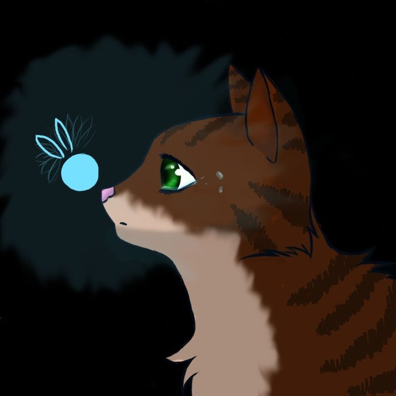 Warrior Cats Dawn Of The Clans Fanart: Leafpool - Forever Warriors