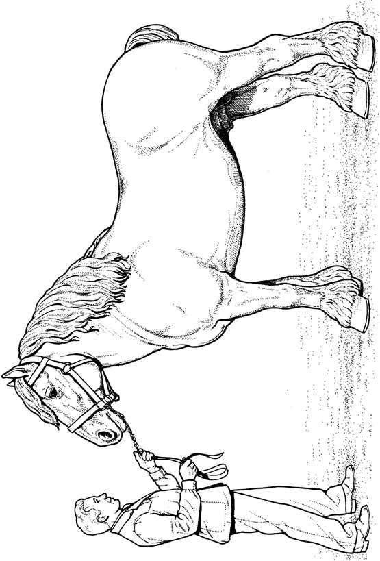 Clydesdale Horse Kleurplaat