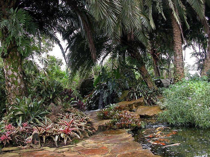 tropical koi pond landscape