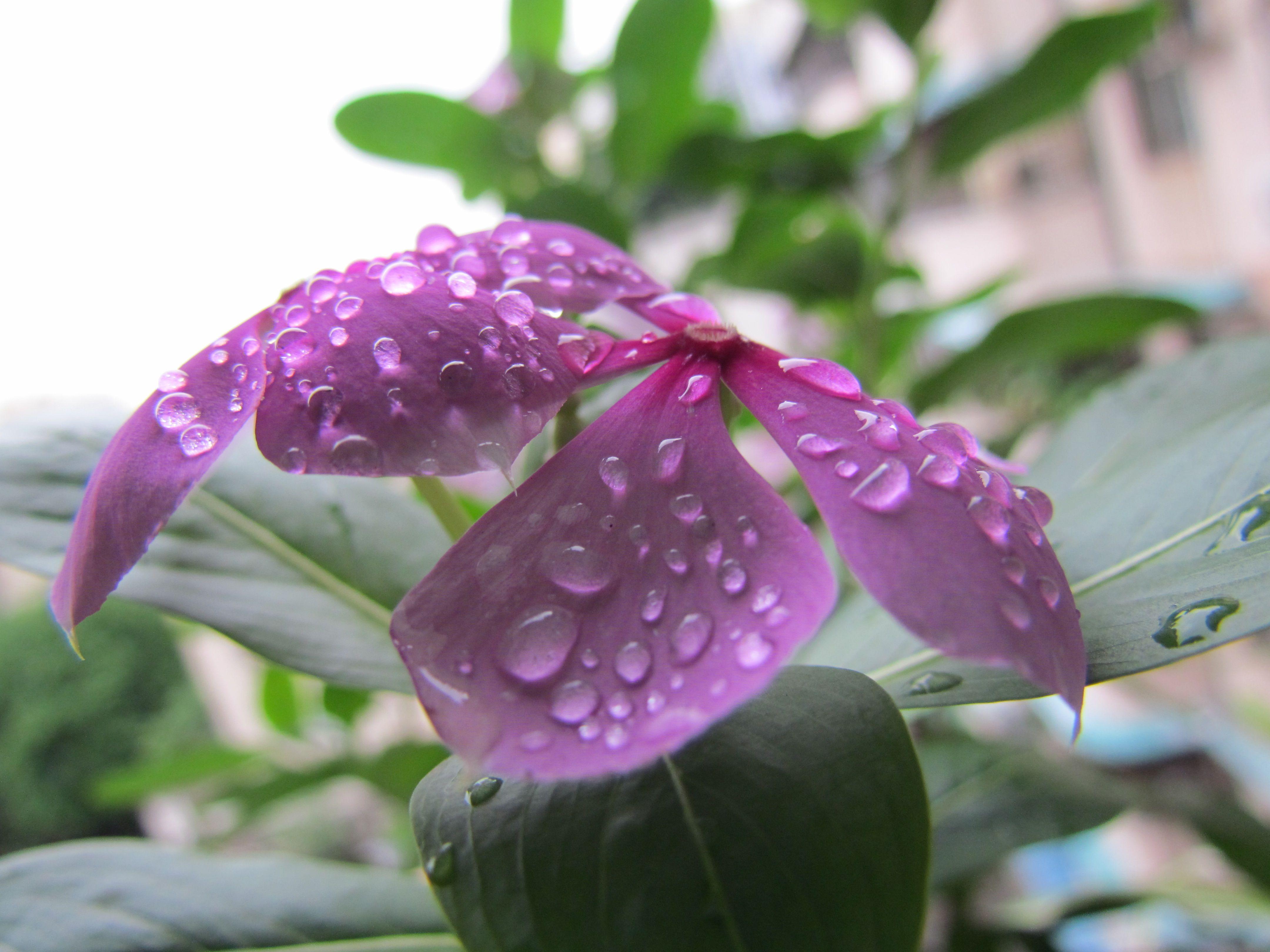 Little Dewy Flowers Flowers Plants