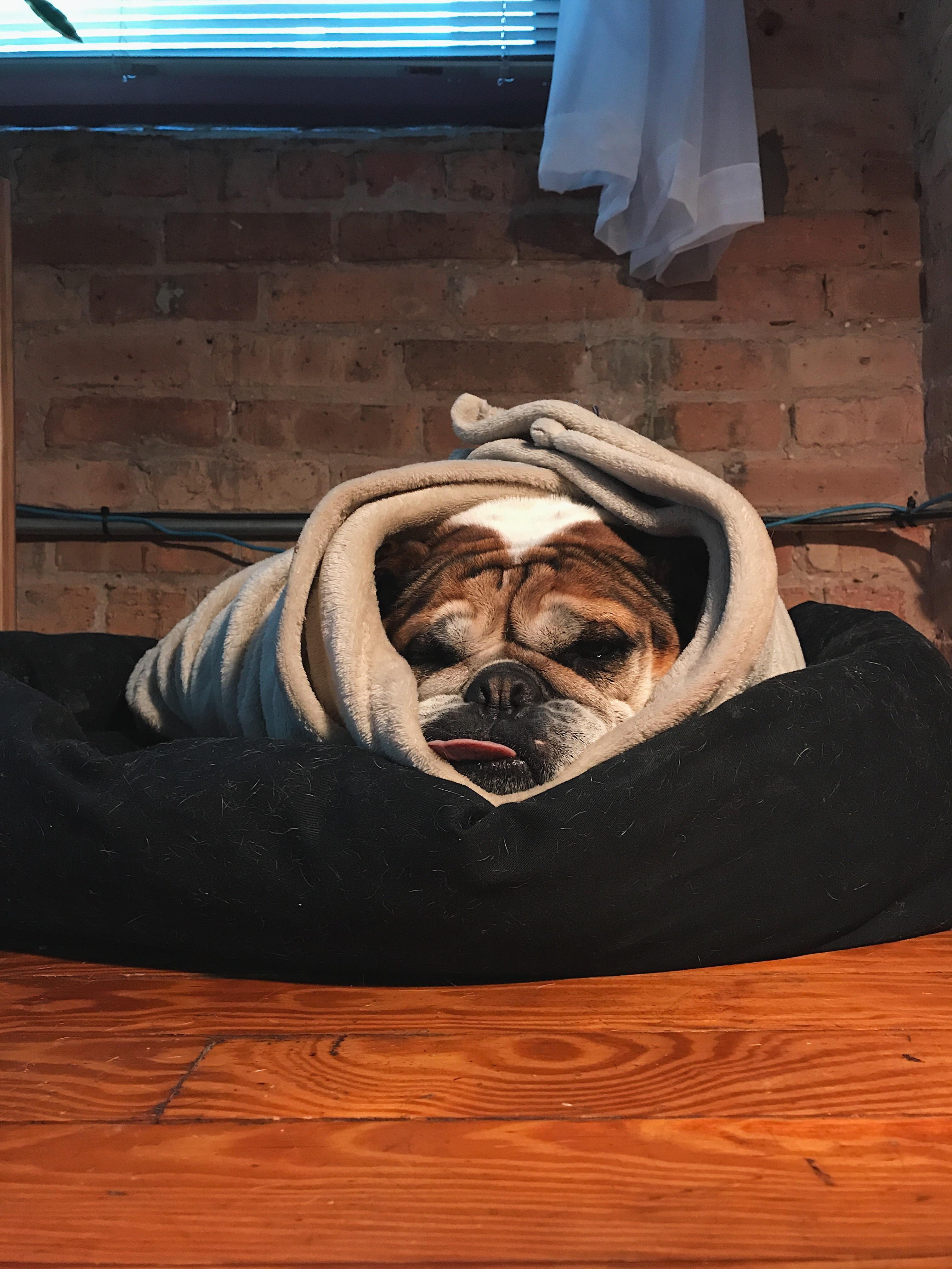 Bulldog Burritohttps://i.redd.it/yu3ldyo30u1z.jpg