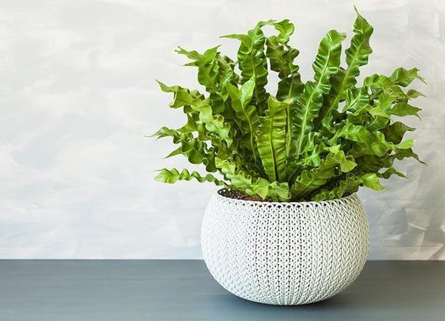 The 10 Best Indoor Hanging Plants to Elevate Your Space #hangingplantsindoor