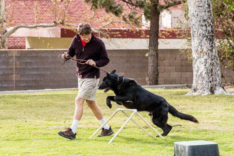 Agility Training Is So Important For Your Dog Read Why Sit