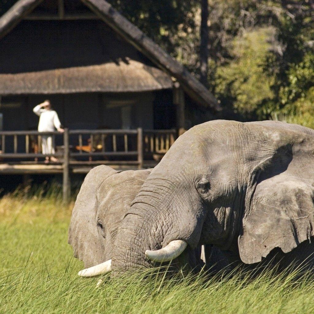 Belmond Khwai River Lodge (Botswana (With images) River