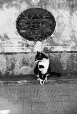 cemetery cat