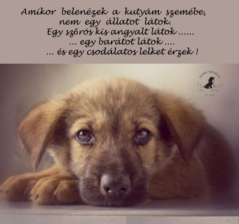 Ha kincseket keresel♡ | Animals and pets, Animals, Dogs and puppies