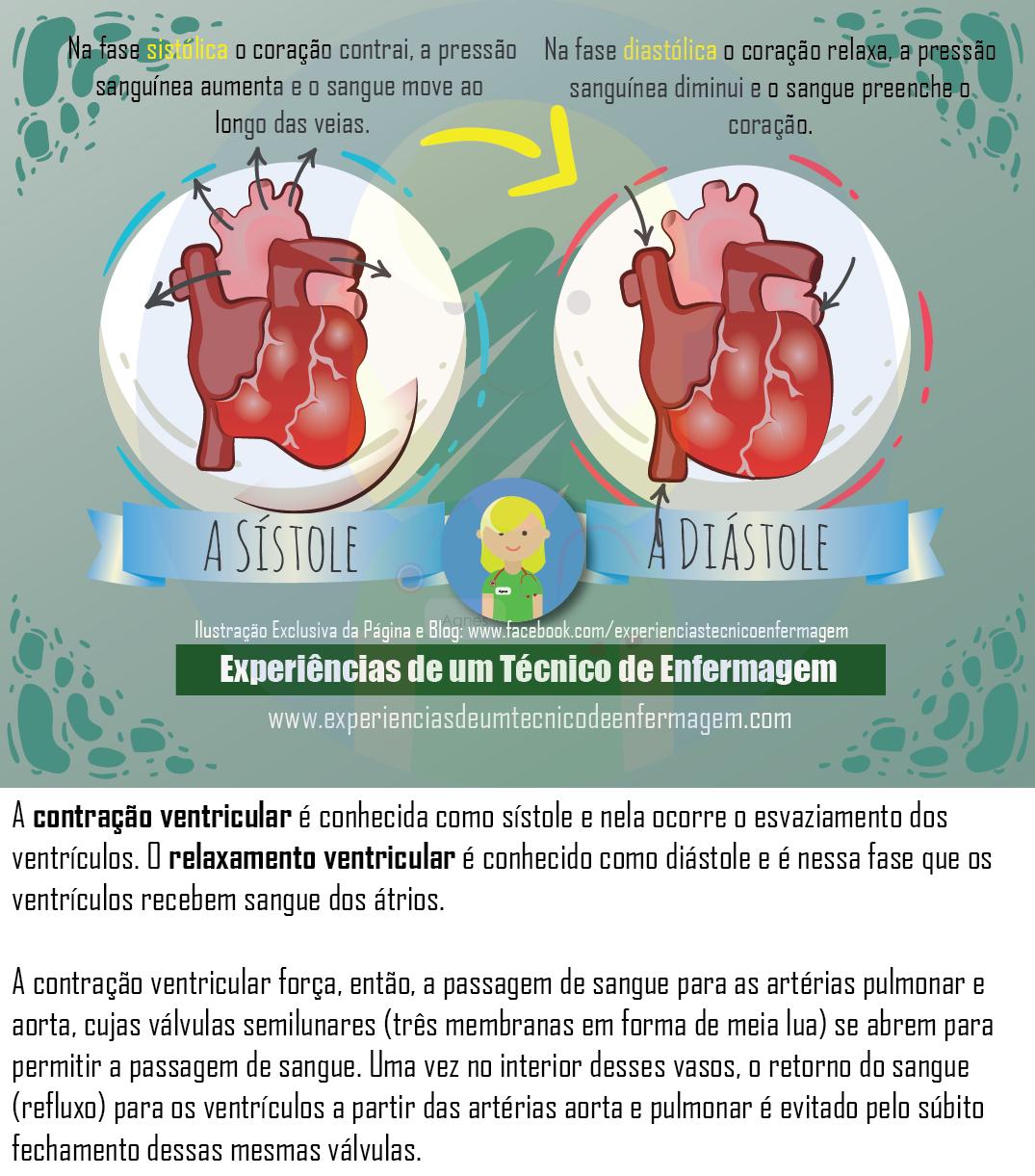 A Sístole e a Diástole | enfermagem | Pinterest | Medicina, Anatomía ...