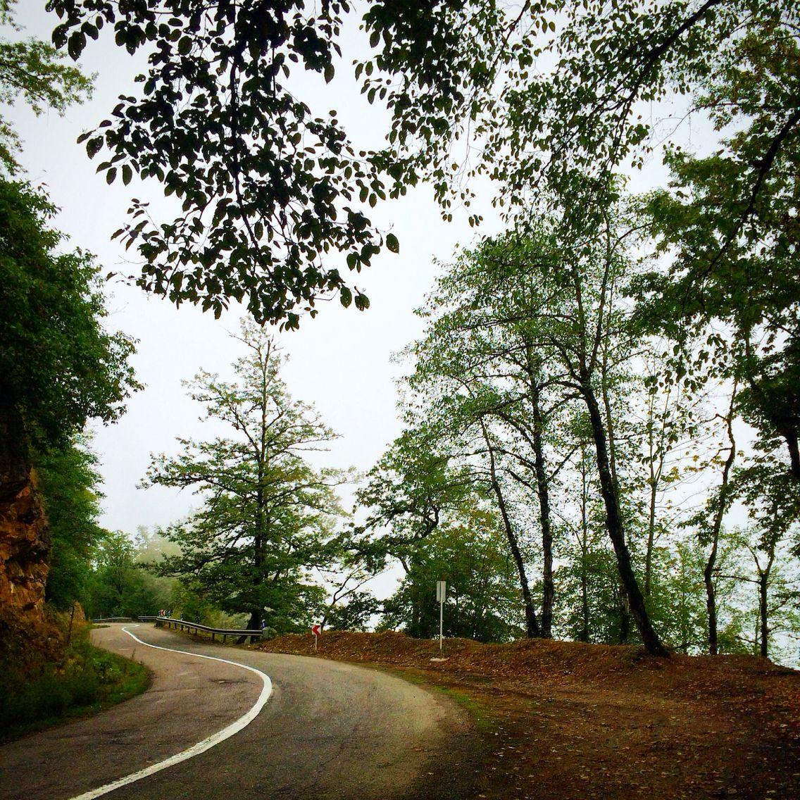 Dalikhani Forest