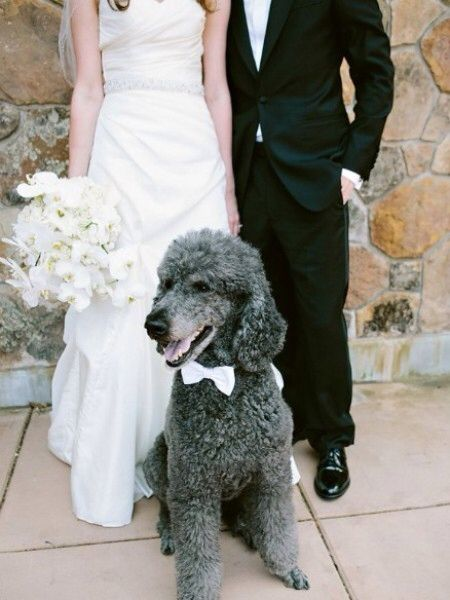Image from http://www.bows-n-ties.com/mens-fashion-tips/wp-content/uploads/2013/08/poodle-white-bow-tie.jpg.