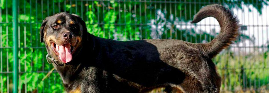 Tierhelfer Ingelheim E V ǀ Hunde Amazon De Ich Denke An Meinen