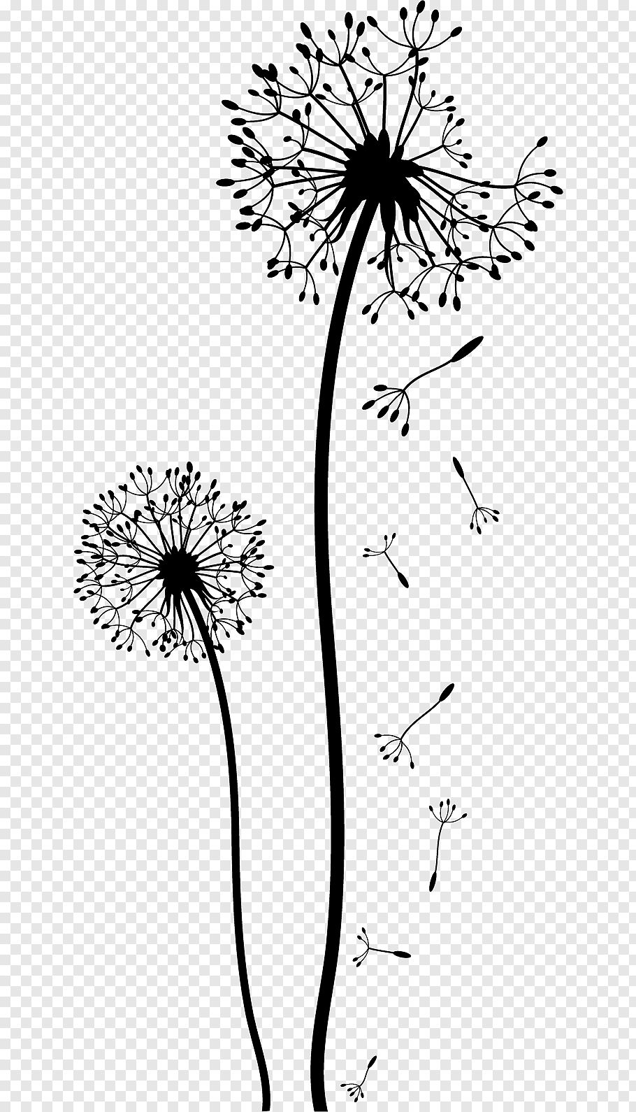 Dandelion Drawing Black And White Flower Wall Free Png Dandelion Drawing Flower Drawing White Flower Png