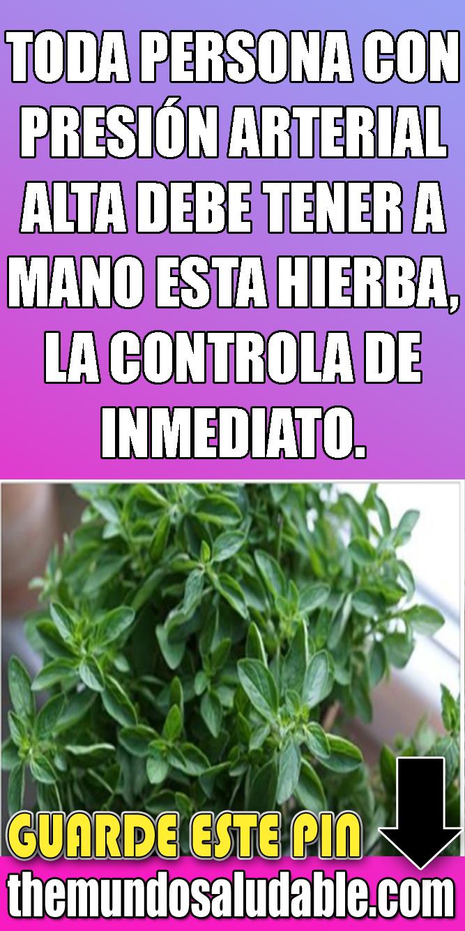 ¿Qué hierbas son buenas para la presión arterial alta?