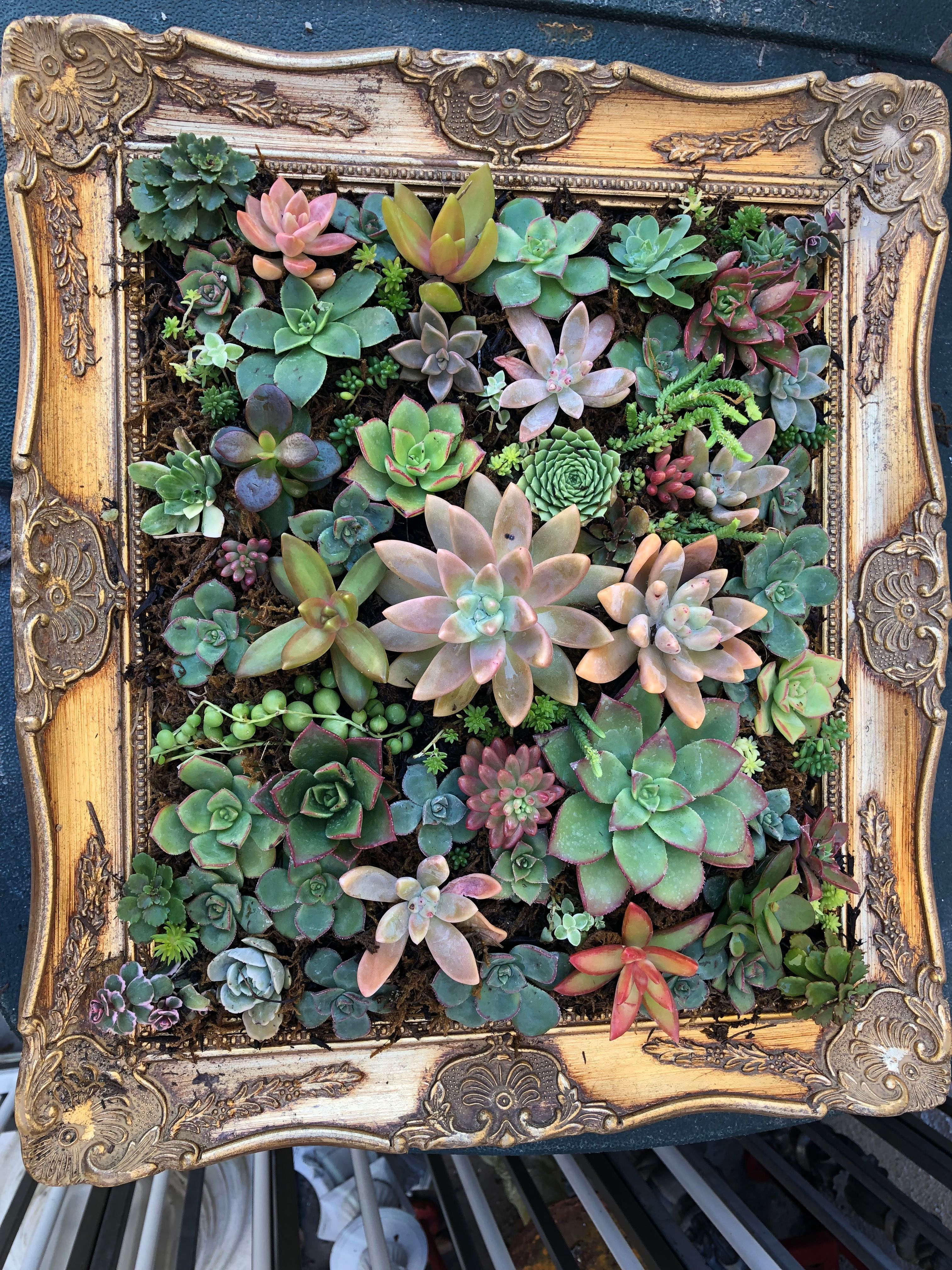 Gorgeous Yard Sale Frame Filled With Succulents Succulents Teacup Gardens Mini Succulents