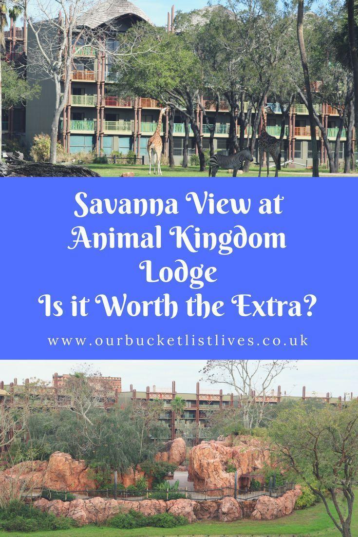 Savanna View at Animal Kingdom Lodge (With images
