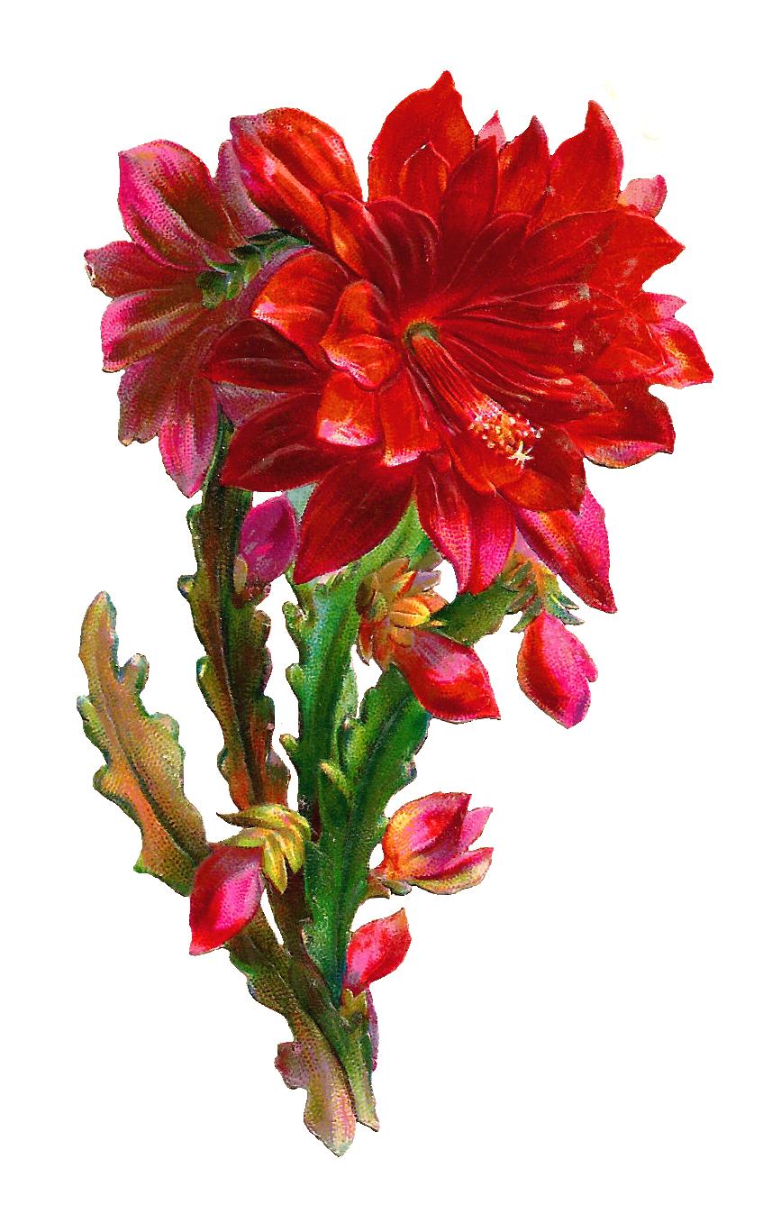 Glanzbilder victorian die cut victorian scrap pflanzen plant flower delivery clip art free glanzbilder victorian die cut victorian scrap pflanzen plant usine where to izmirmasajfo