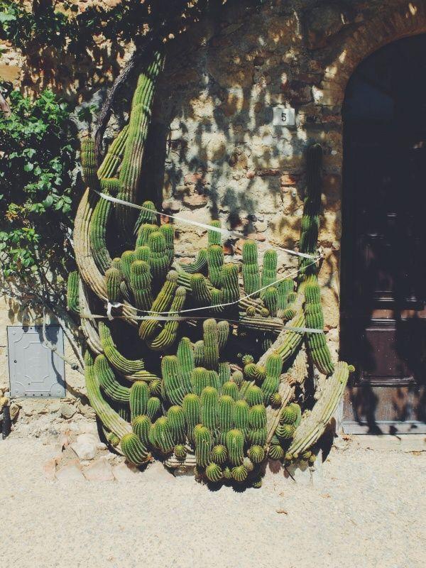 We Make Tables Plantas Cacto Plantae