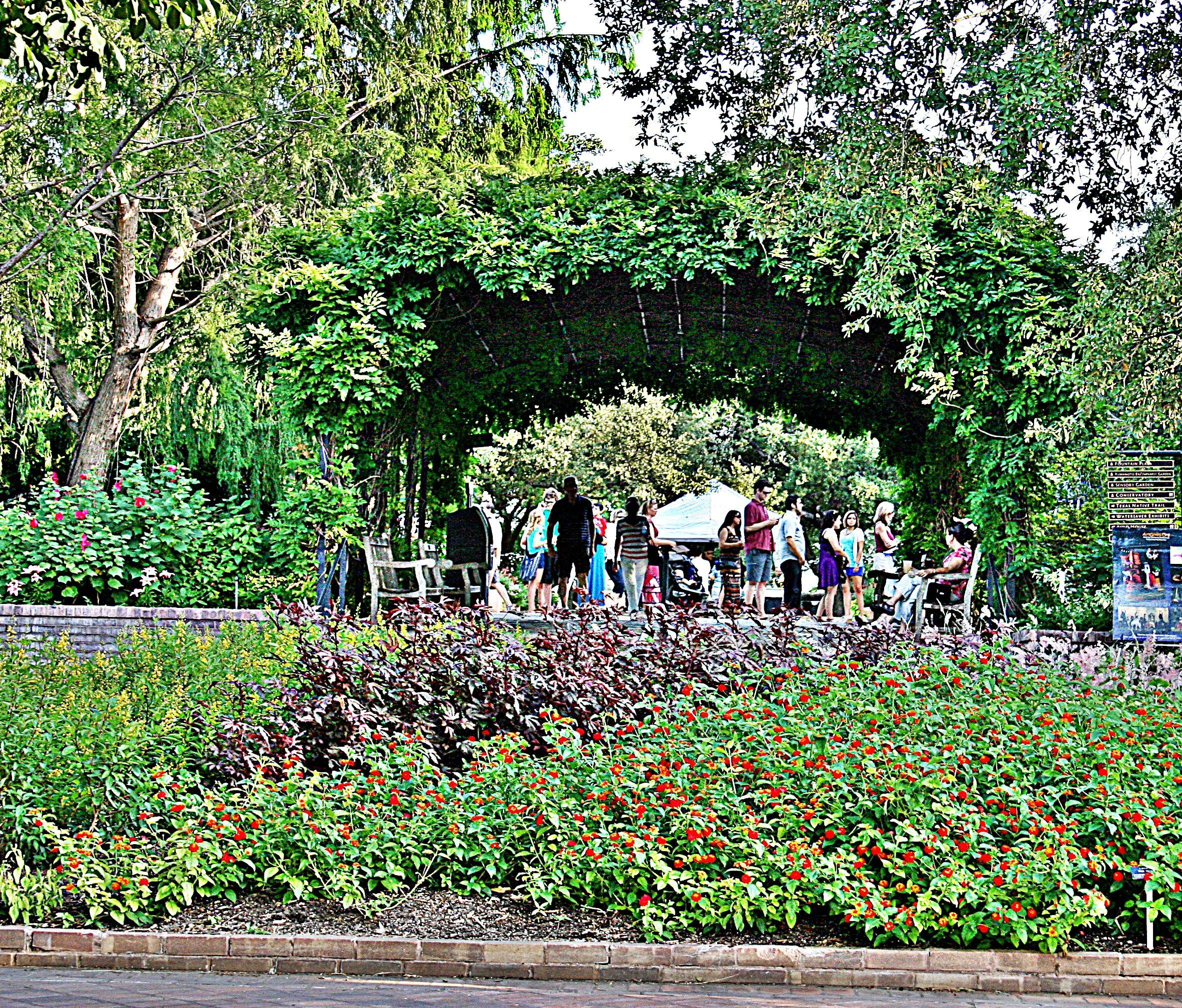 Wisteria Arbor At San Antonio Botanical Gardens