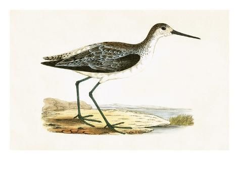 Giclee Print: Marsh Sandpiper, from 'A History of the Birds of Europe Not Observed in the British Isles' by English : 24x18in #britishisles
