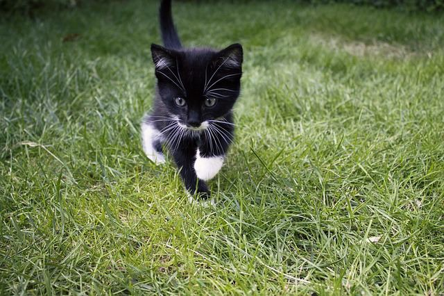 5 Facts About Tuxedo Cats Unique Black And White Cats White Cats Girl Cat Names Cat Names