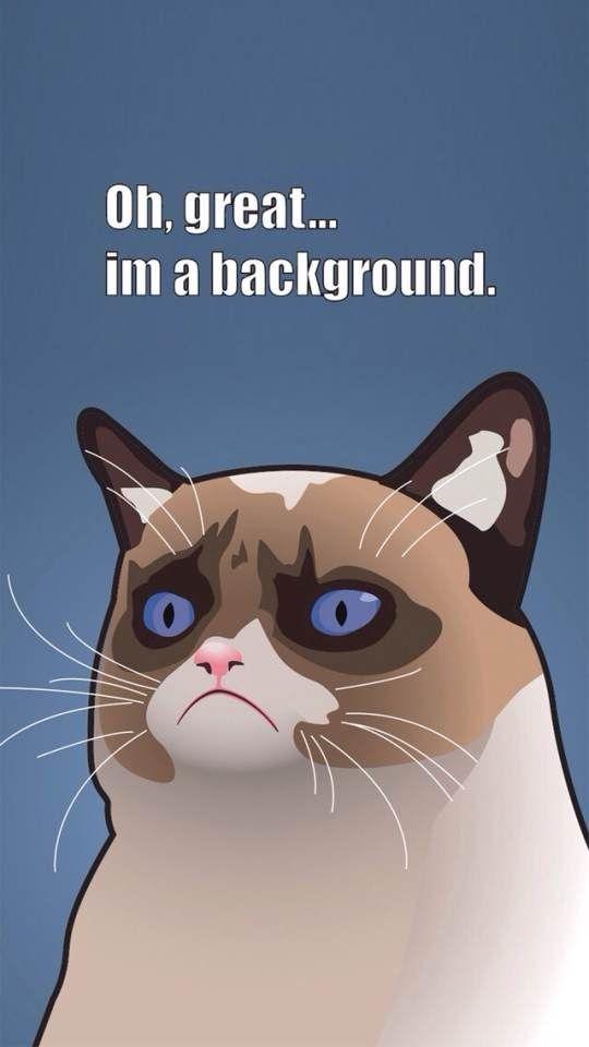 Tard The Grumpy Cat Wallpaper For Iphones Iphone Wallpapers